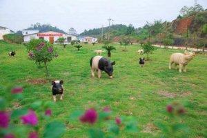 家庭猪场解决环保问题,不妨看看种养结合模式
