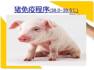 实用技术:保育猪如何有效驱虫,及免疫程序!