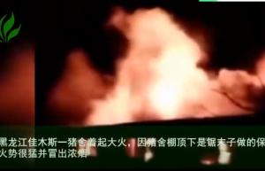 黑龙江佳木斯一猪舍起火,90多头猪全被烧死!
