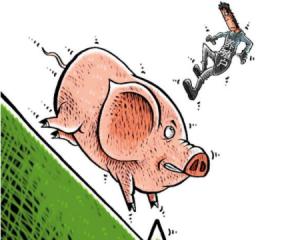 1月5日猪市播报:河南大跌你跑了吗?