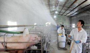 养猪场疫情过后该做些什么?