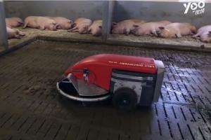 养猪场里的扫地机器人,时刻保持猪圈清洁,太高能了……
