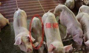 一张图告诉你造成育肥猪生长慢的