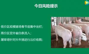 1月17日猪价早报:规模猪场有集中出栏现象
