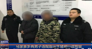 湖北马家寨乡两男子违规贩运生猪被行政拘留!