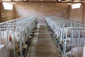 猪舍潮湿会造成哪些危害?怎么处理?