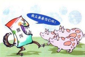 春季猪场最易发生的猪病(蓝耳、流行性腹泻、流感),不要让它们成为猪场利润的绊脚石!