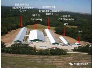 猪场如何打造出牢固的生物安全堡垒?