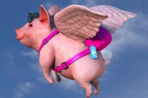猪还能飞多久?