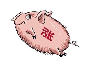 猪价涨的有点龌龊,到底是什么情况?