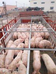 非洲猪瘟清场后如何复产?可参考这11个操作步骤细则