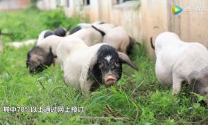 生态农业之典范--监利县平强家庭农场
