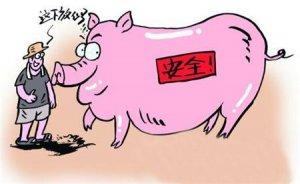 惨不忍睹!广西这家猪场5000多头猪一夜间全死光了,1500万元血本无归!