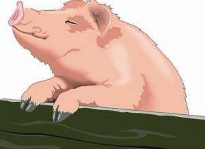 为何生猪养殖户巨亏,猪肉零售商却大赚?