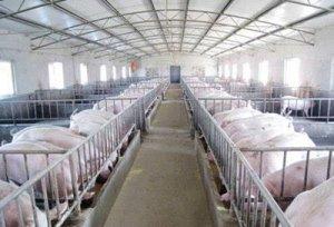 【管理】春季养猪场产房管理的三点注意事项