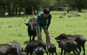 西南地区养猪秘籍 |