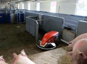 超大号扫地机器人,专门清理猪粪,原来国外都是这样养猪的