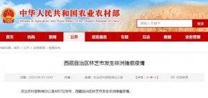 西藏自治区林芝市发生非洲猪瘟疫情