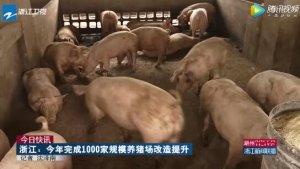 浙江:今年完成1000家规模养猪场改造提升