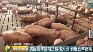 非瘟累计扑杀101万头猪!美国对中国猪肉缺口虎视眈眈、瘦肉猪期货大涨!
