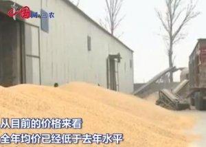 玉米价格处于底部运行区间 低于去年水平