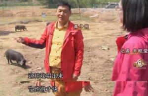 华中地区养猪秘籍 | 硬核分享