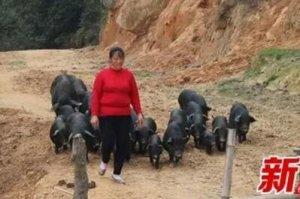 """""""猪倌脱贫记""""——耒"""