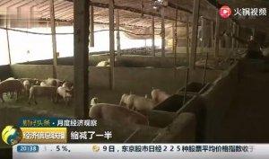 山东高青:生猪供应趋紧 存栏量明显不足