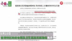 香港查出非洲猪瘟病毒感染 政府销毁上水屠宰场6000头生猪
