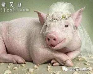 80小伙的豪猪致富经养殖,养豪猪预收入达30万!