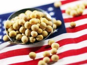 """""""非洲猪瘟""""重创美国大豆出口,专家建议美国农民大量减产"""