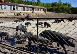 中央环保督察组:中粮下属企业保护区内养猪,雏鹰集团破坏草原生态