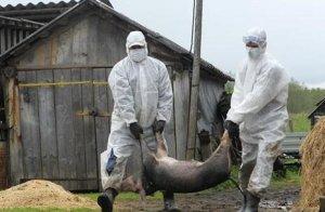 国际疫情:为控制非洲猪瘟越南动用军队,亚洲多地疫情蔓延
