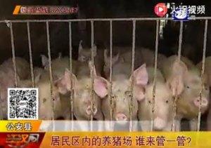 居民区内的养猪场 谁来管一管?