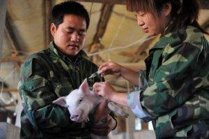 猪圈里的致富经――白沙金波乡养猪大户李桂胜带领56户贫困户养殖五脚猪