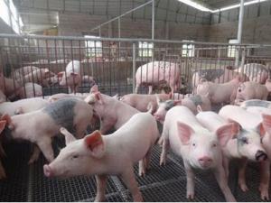 河南规范养殖档案促进畜牧生产