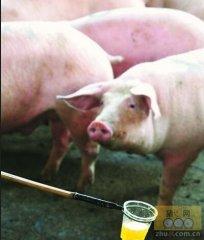 看看这10泡猪尿,怎么判断猪病?