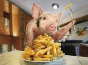 猪价跌幅逾13%,美国打响猪价保卫战