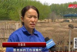 记者体验养猪人的一天致敬平凡岗位上的劳动者