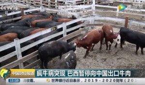 巴西疯牛病突现 已暂停向中国出口牛肉 牛肉价格要涨?