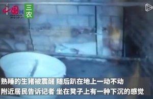 监控记录吉林龙家堡矿震瞬间:猪被震醒后趴着不敢动