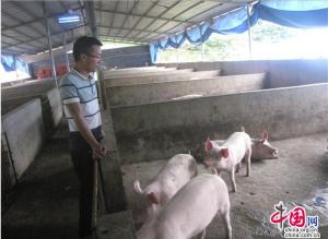 湖南隆回:90后大学生返乡发展生态养猪致富路