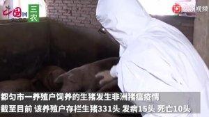 贵州省再现非洲猪瘟!都匀市养殖户存栏生猪331头