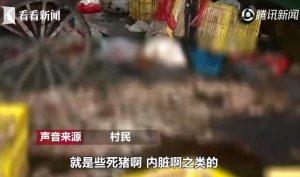 村民吃饭闻到恶臭 发现被查封工厂又用腐肉炼油