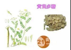黄芪多糖在养猪生产中的应用作用