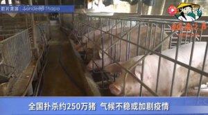 越南非洲猪瘟疫情扩大 兽医局建议颁紧急状态