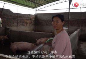 广东猪价涨价到十块钱了,小妹还有一百多头大猪,敢不敢购买小猪