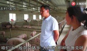 今年养猪赚大了,猪价大涨,可为啥养猪老板还不卖!