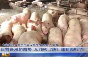 生猪价格持续上涨,价格将近9块!市场小混乱,养殖户理性卖猪!