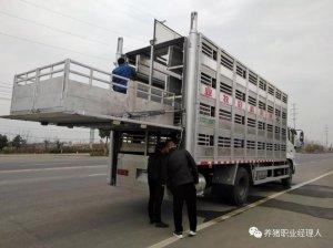 养猪生物安全之车辆运输环节